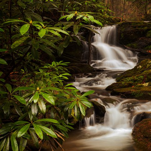 Mill Creek Waterfall with Rhododendron and Cascading Waterfall