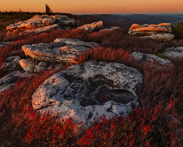 Bear Rocks Sunset Looking South with golden light a large round rock in the forground and red cranberry bushes