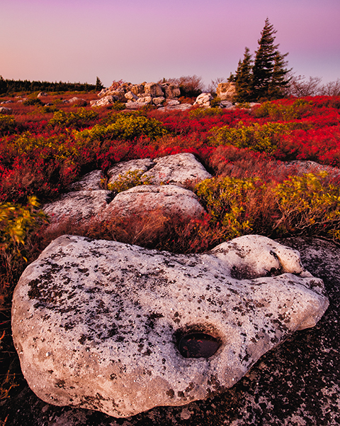Bear Rocks West Virginia after the sun has set with red cranberry bushes and a large rock